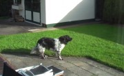 dog enjoing the wind