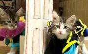 kittens as actors