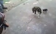 brave mother cat