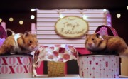hamster date