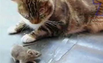 cat scared of mouse