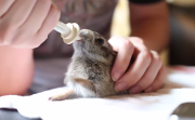 bunny and his milk
