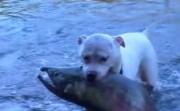 dog and his fish