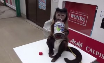 monkey and its juice