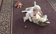 Siberian Husky playing with a baby