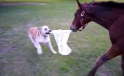 dog and horse playing