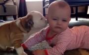 bulldog and a baby