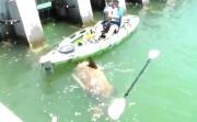 catching a big fish