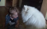dog and baby kisses