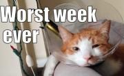 Worst week ever