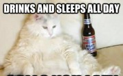 Drinks and sleeps all day. Calls you lazy.