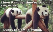 I love Pandas, they're so chill. they're like: