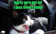 5 Hilarious Cat GIFs Make you smile