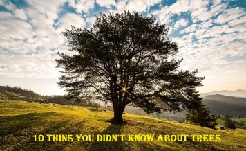10 Interesting Facts About Trees That You Didn't Know