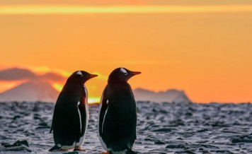 From Polar Landscapes to Roaming with Penguins, Discover the Wondrous Antarctic